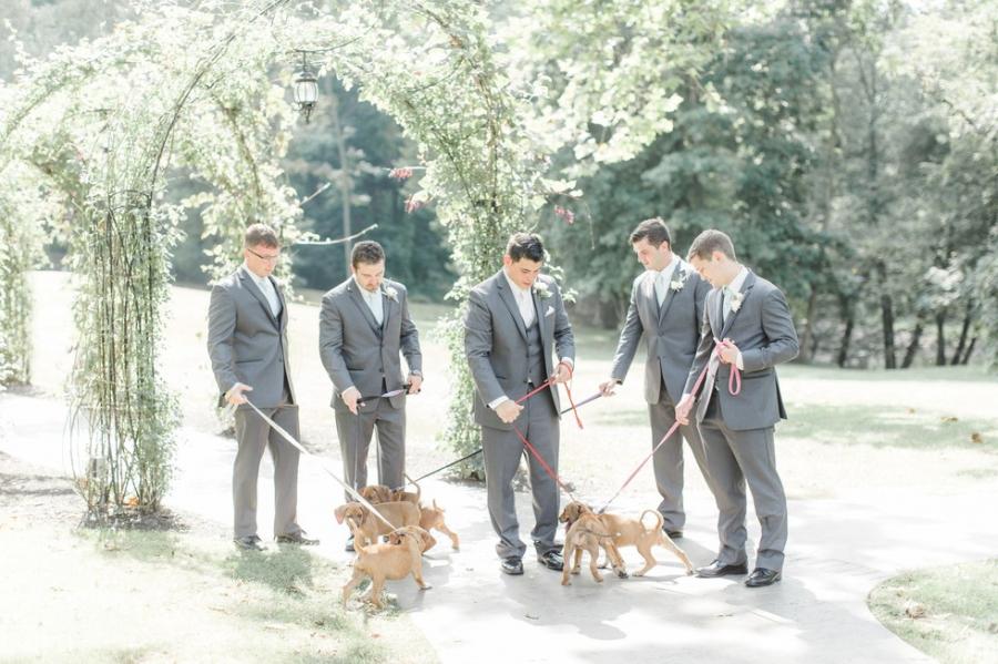 Cum arata imaginile de la nunta unui cuplu iubitor de animale? - Poza 6