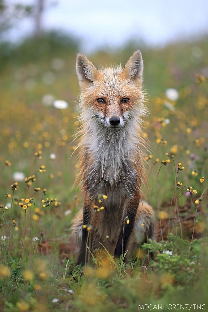 Concurs foto dedicat mediului: Splendoarea naturii, in poze uluitoare - Poza 8