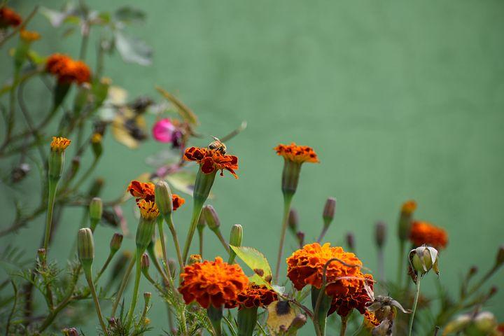 Gingasia florilor de primavara in poze superbe - Poza 24