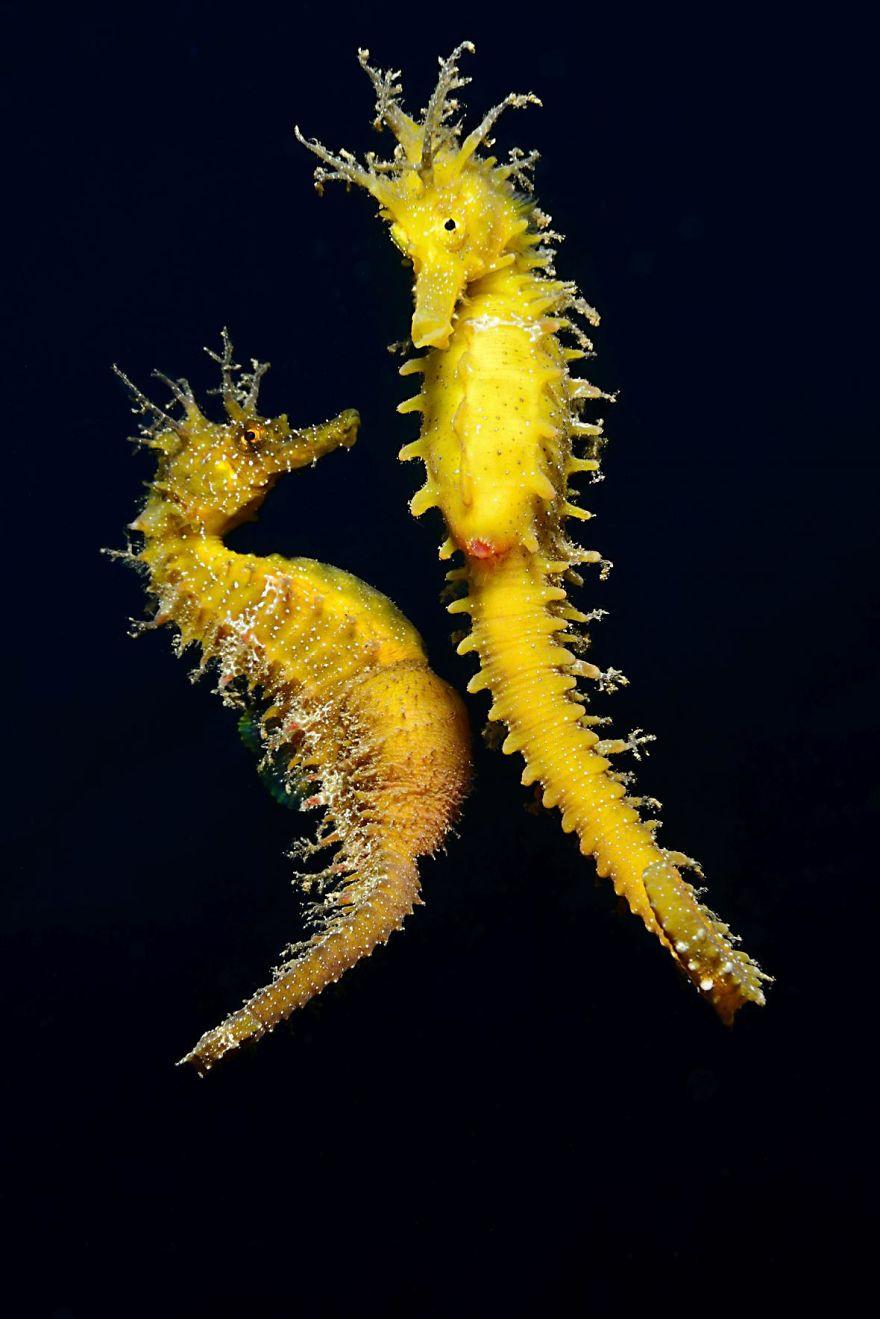 Fotografii superbe din uimitoarea lume subacvatica - Poza 21