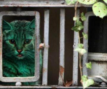 Animale surprinse in cele mai uimitoare ipostaze