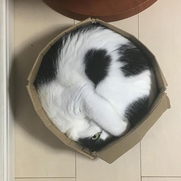 20+ Pisici contorsioniste, in poze haiose - Poza 21
