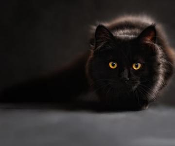 20+ Lucruri pe care nu le stiai despre pisica ta
