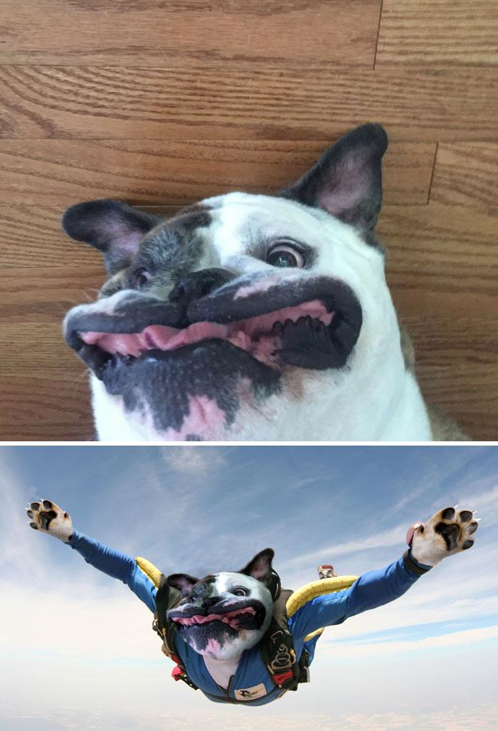 Uimitoare si hilare: Cele mai tari poze prelucrate in Photoshop - Poza 24