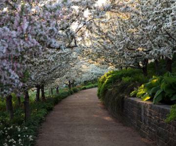 13 peisaje si flori superbe de primavara