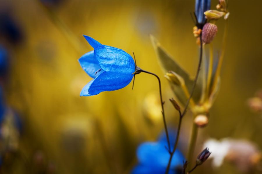 Cele mai frumoase flori din lume, intr-un pictorial de exceptie - Poza 26