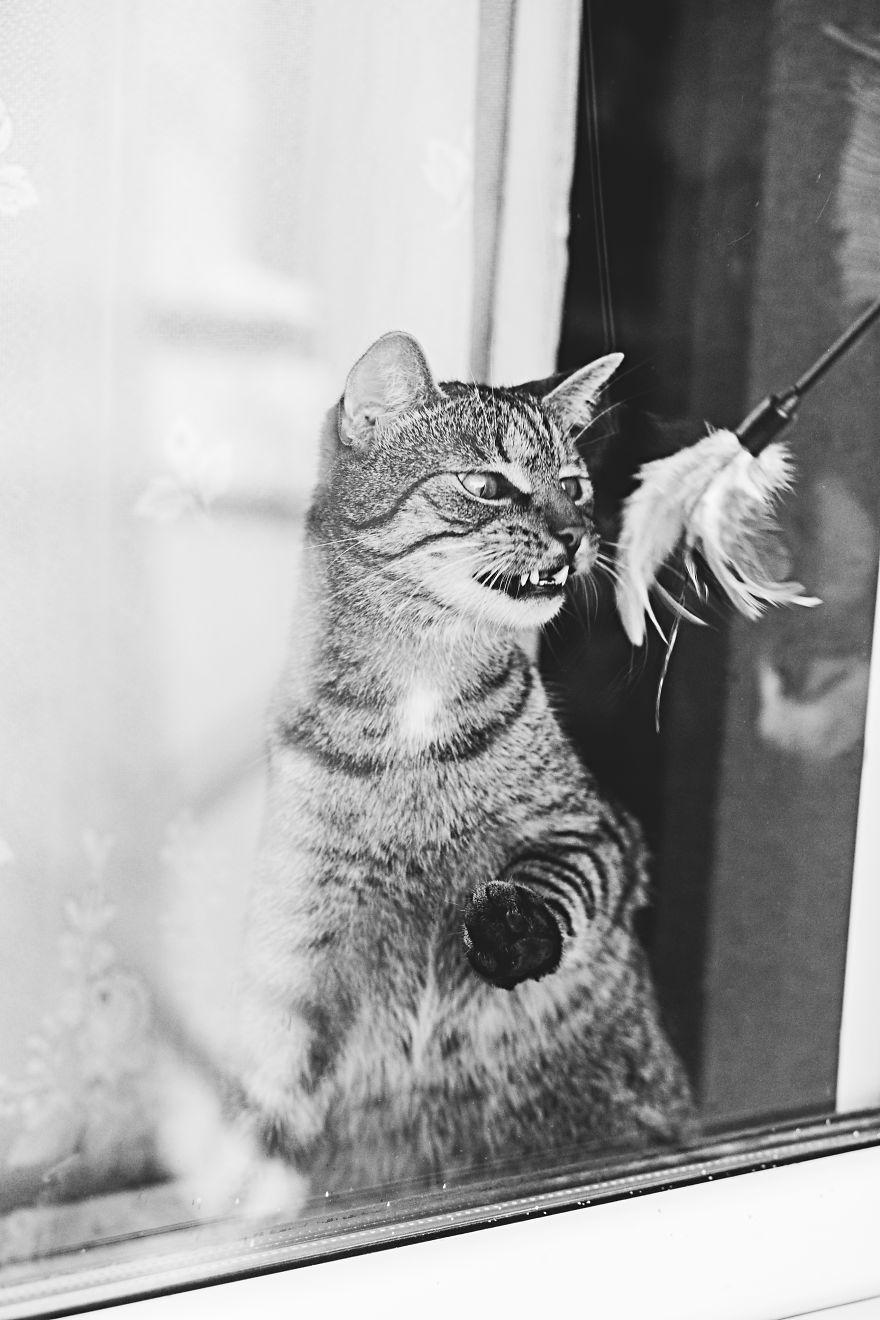 Pisici la fereastra, in poze alb-negru - Poza 4