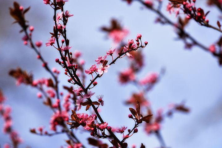 Splendoarea copacilor infloriti in poze superbe - Poza 3