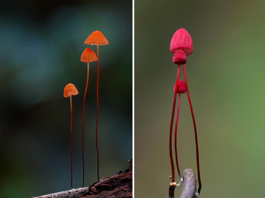 10+ Ciuperci fantastice, in poze ireal de frumoase - Poza 10