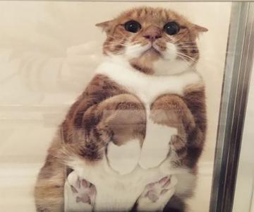 Pisici pe sticla. Altfel de ipostaze haioase ale nabadaioaselor feline