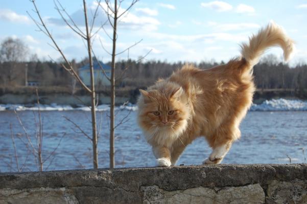 Ce-ti transmite pisica prin pozitia cozii - Poza 3