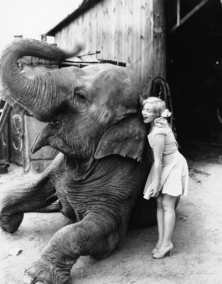 Cele mai expresive animale, intr-un pictorial adorabil - Poza 3