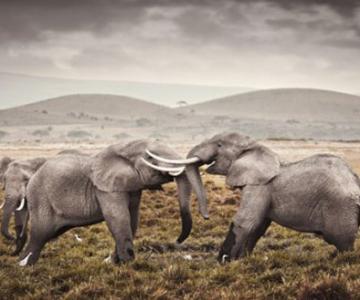Klaus Tiedge s-a indragostit de Africa