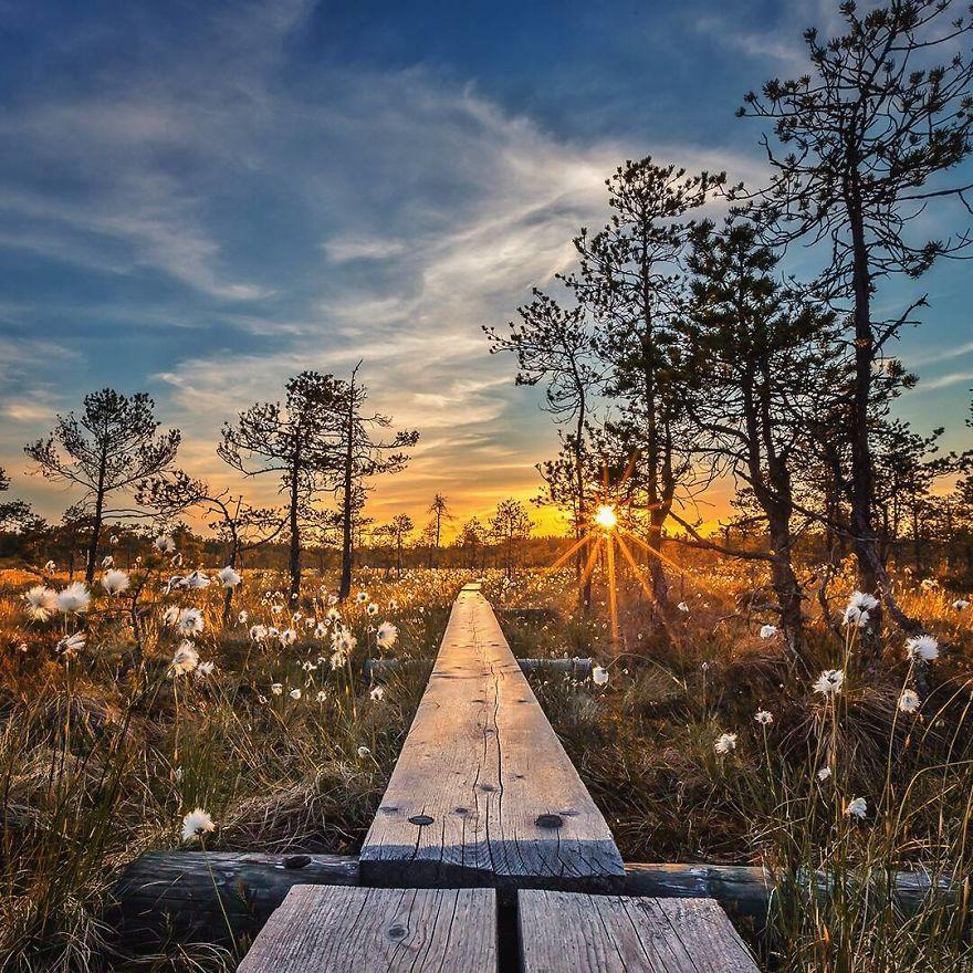 Padurile fermecate chiar exista! Poze superbe din sanul naturii - Poza 13