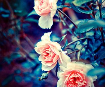 Florile Barbarei in 12 imagini superbe
