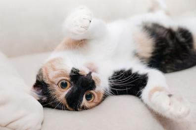 Ce face orice posesor de pisica in secret - Poza 6