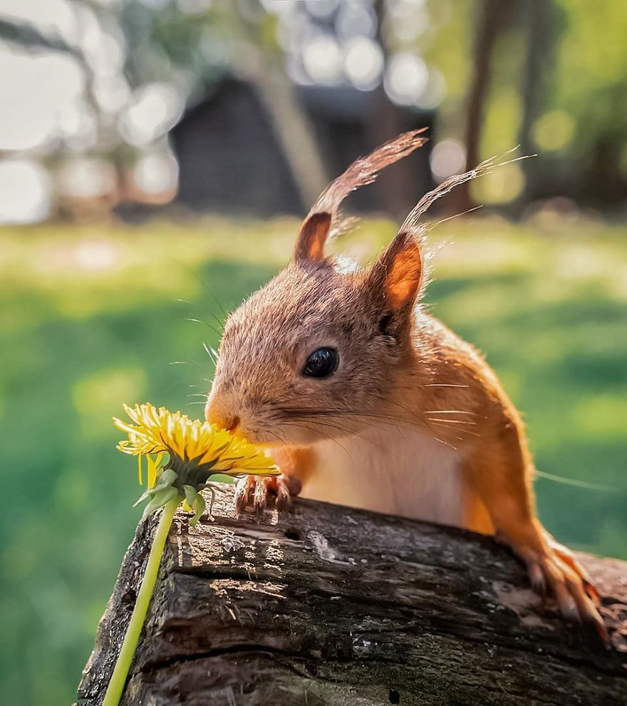 Padurile fermecate chiar exista! Poze superbe din sanul naturii - Poza 29