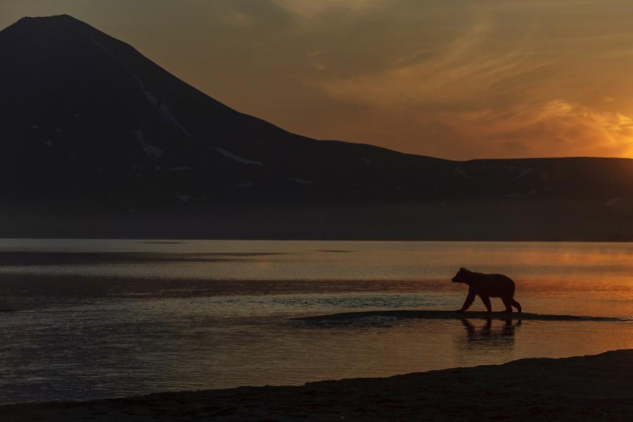 Ursul brun din Kamchatka, intr-un pictorial de exceptie - Poza 22