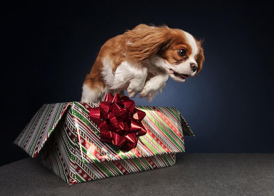 Cel mai bun prieten al omului, in ipostaze festive - Poza 11