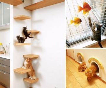 Paradisul pisicilor, de Asahi Kasei