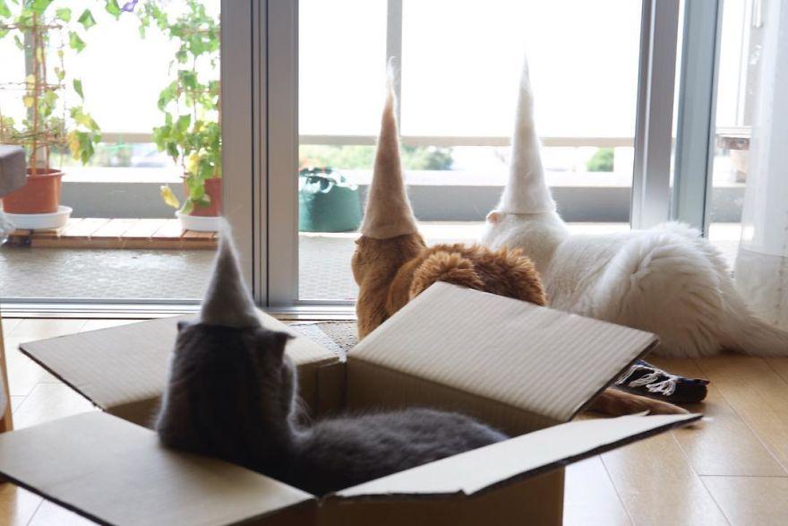 Cochete si haioase: Pisici cu palarii blanoase - Poza 2