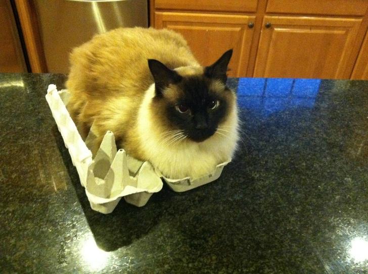 Pisicile chiar au simtul umorului. Avem dovada! - Poza 21