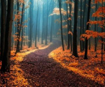 Un vis de toamna, printre copaci