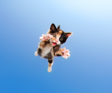 Pisicute adorabile surprinse in aer