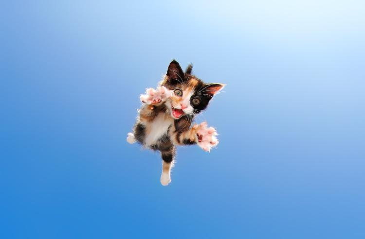 Pisicute adorabile surprinse in aer - Poza 1