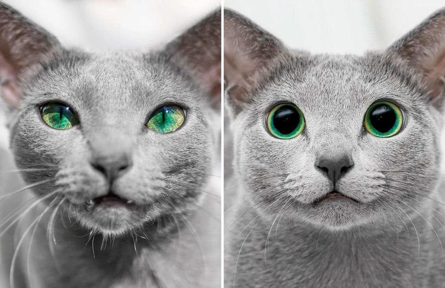 Pisicutele cu cei mai frumosi ochi din lume, in poze superbe - Poza 12