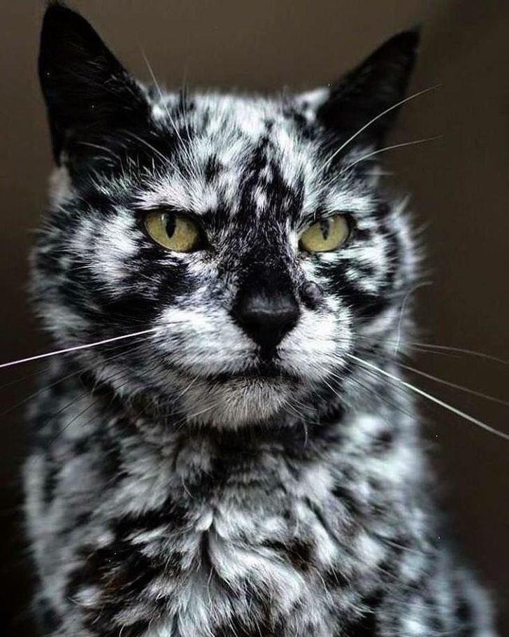 13 exemple de pisici cu infatisare atipica - Poza 1