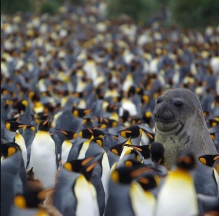 20+ Animale poznase care se stramba in fata aparatului foto - Poza 8