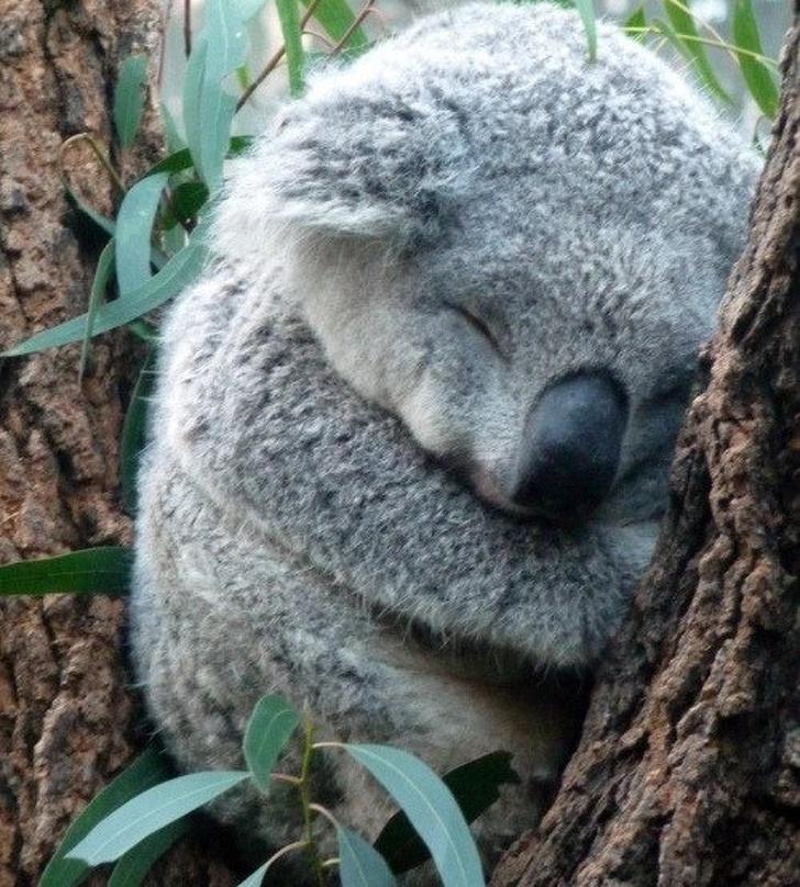 Cele mai simpatice animale lenese, in poze adorabile - Poza 14
