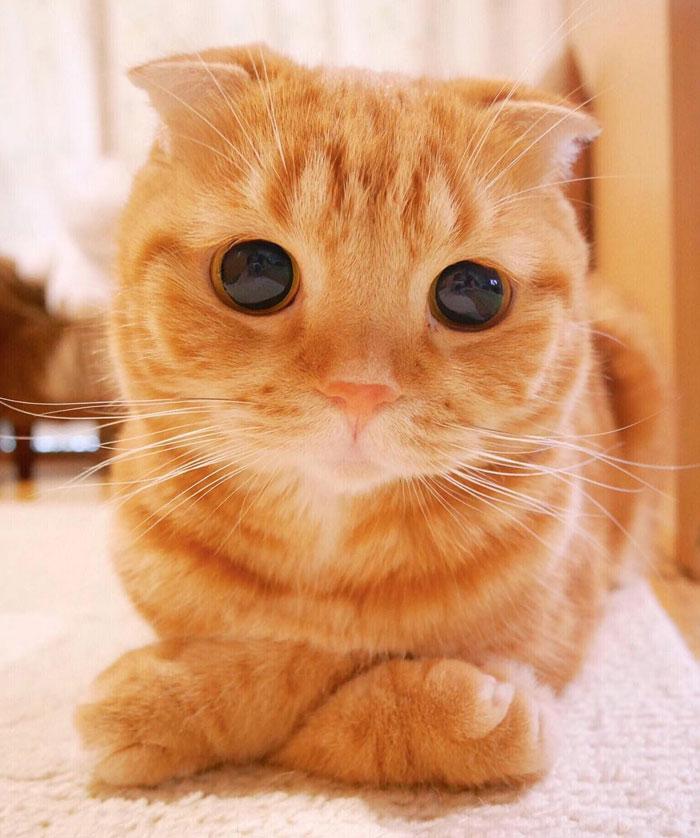 10+ Pisici superbe, in poze de colectie - Poza 6