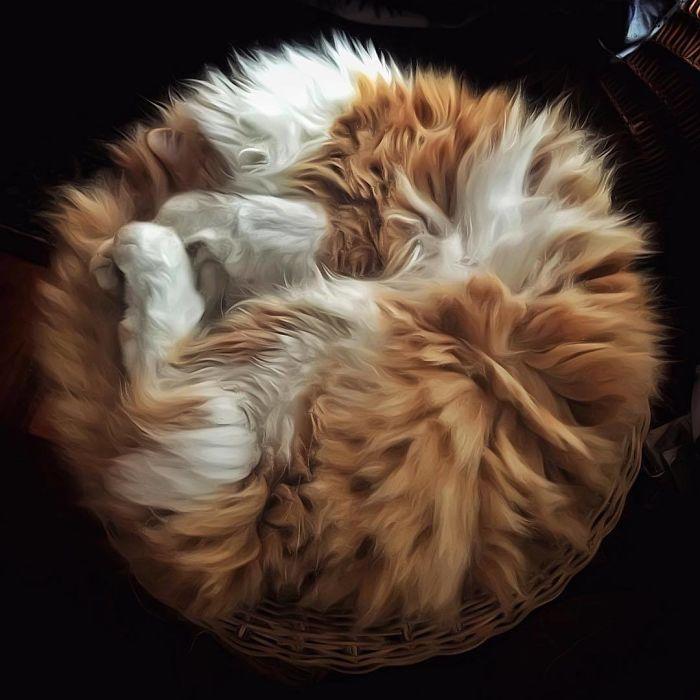 Viata de pisica, in poze adorabile - Poza 4