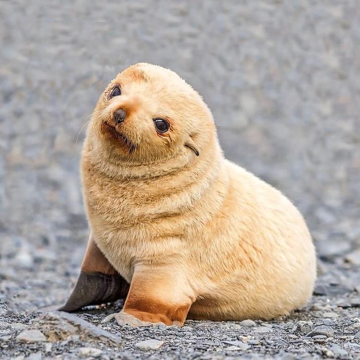 Cele mai simpatice animalute de la Polul Nord, in poze adorabile - Poza 18