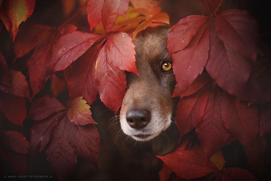 Portrete autumnale de suflet, de Anne Geier - Poza 1