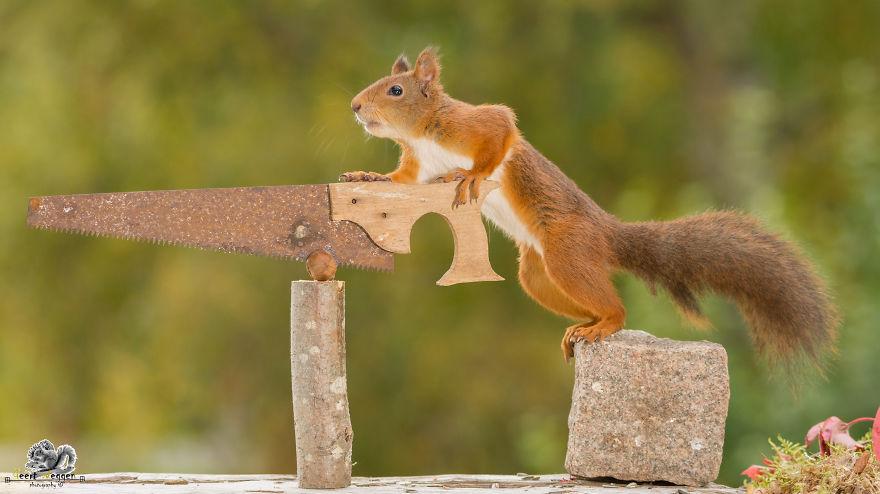Frumoasa poveste cu veverite roscate, intr-un pictorial adorabil - Poza 19