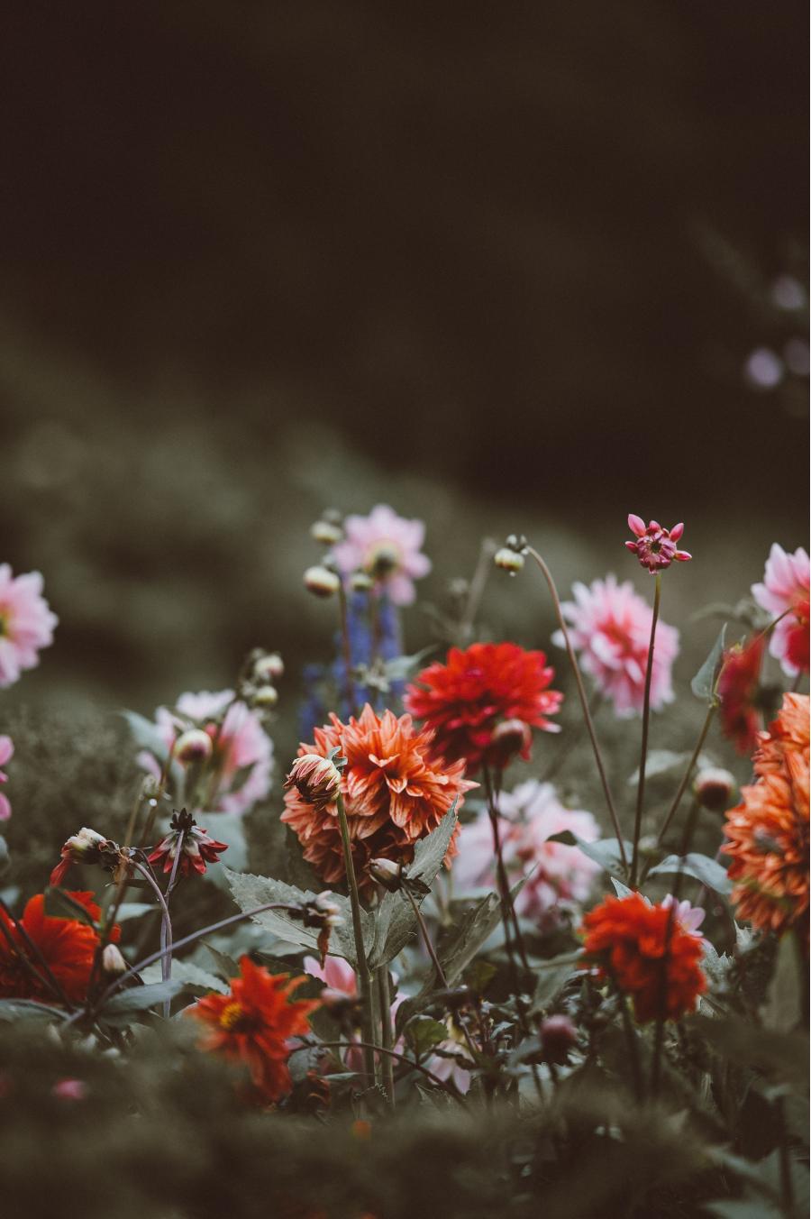 Cele mai frumoase flori din lume, intr-un pictorial de exceptie - Poza 4