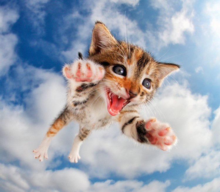 Pisicute adorabile surprinse in aer - Poza 8