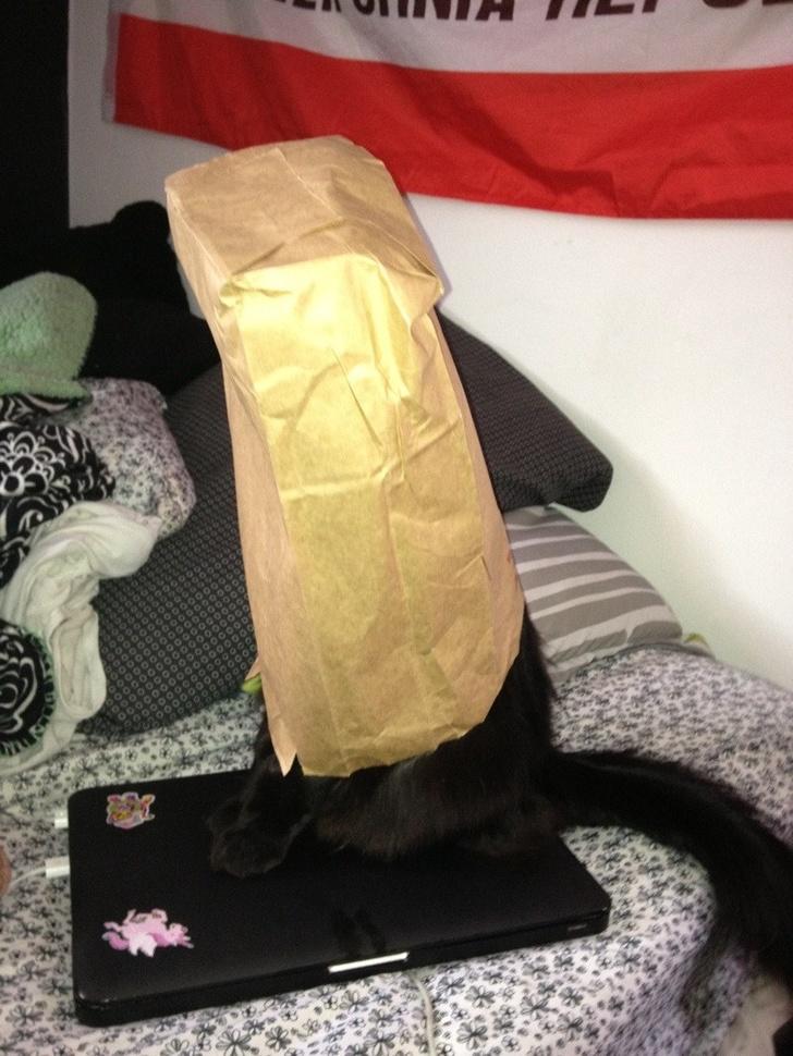 Pisicile chiar au simtul umorului. Avem dovada! - Poza 14