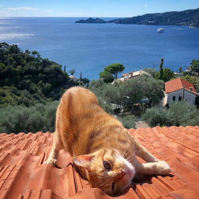 Viata de pisica, in poze adorabile - Poza 7