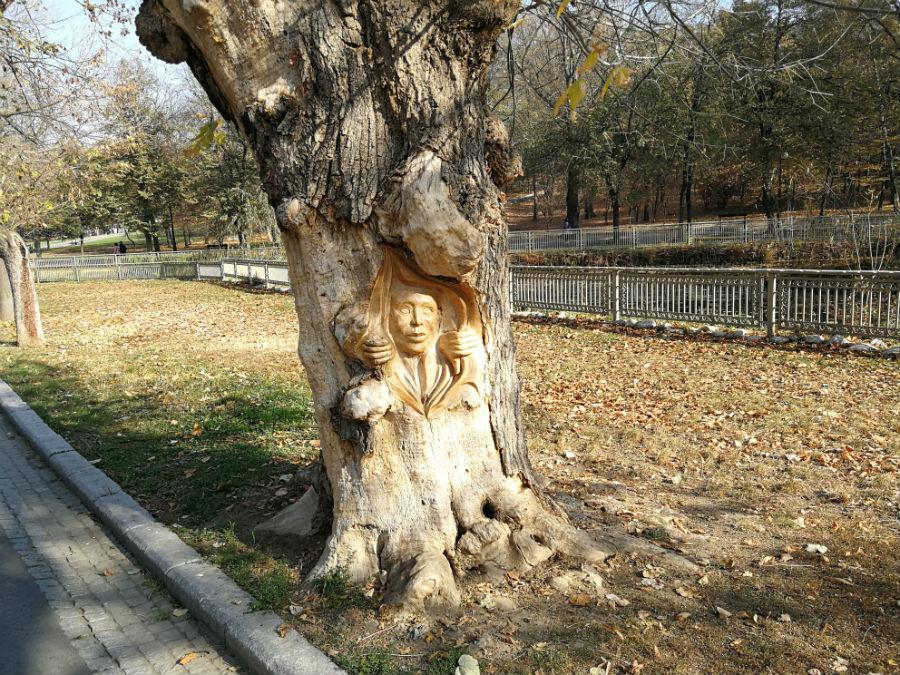 Parcul Nicolae Romanescu: Minunea verde din Banie, in poze superbe - Poza 2