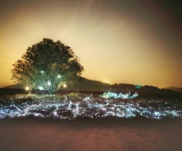 Lee Euneyol aprinde noaptea pe campuri, prin copaci