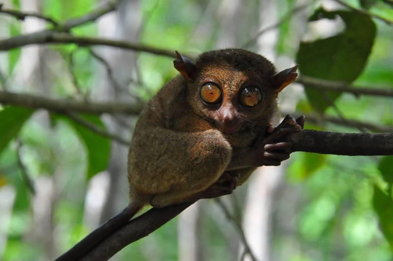 Cele mai dragute animale din lume, intr-un pictorial adorabil - Poza 10