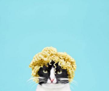 Cheeto, o pisica haioasa, intr-un pictorial trasnit