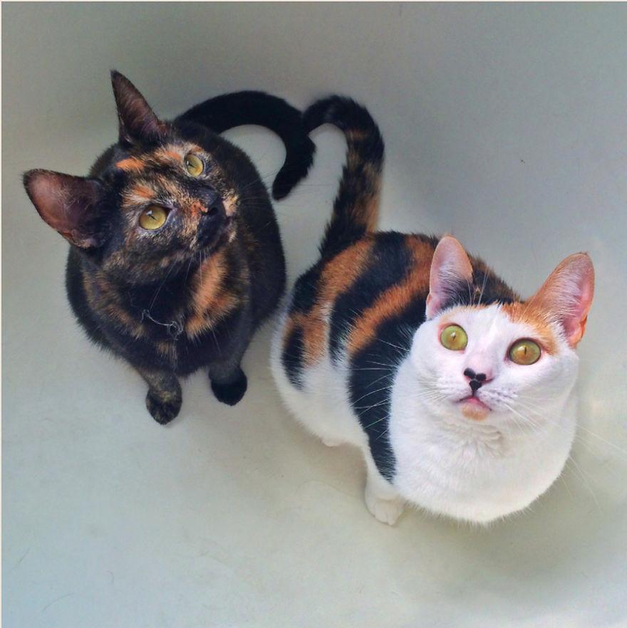 Cele mai frumoase poze cu pisici - Poza 21