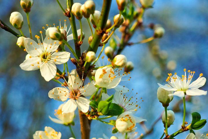 Splendoarea copacilor infloriti in poze superbe - Poza 15
