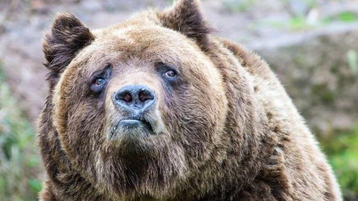 20+ Animale poznase care se stramba in fata aparatului foto - Poza 19