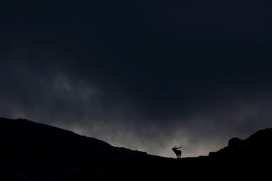 Cele mai bune fotografii cu si despre natura din 2019 - Poza 10